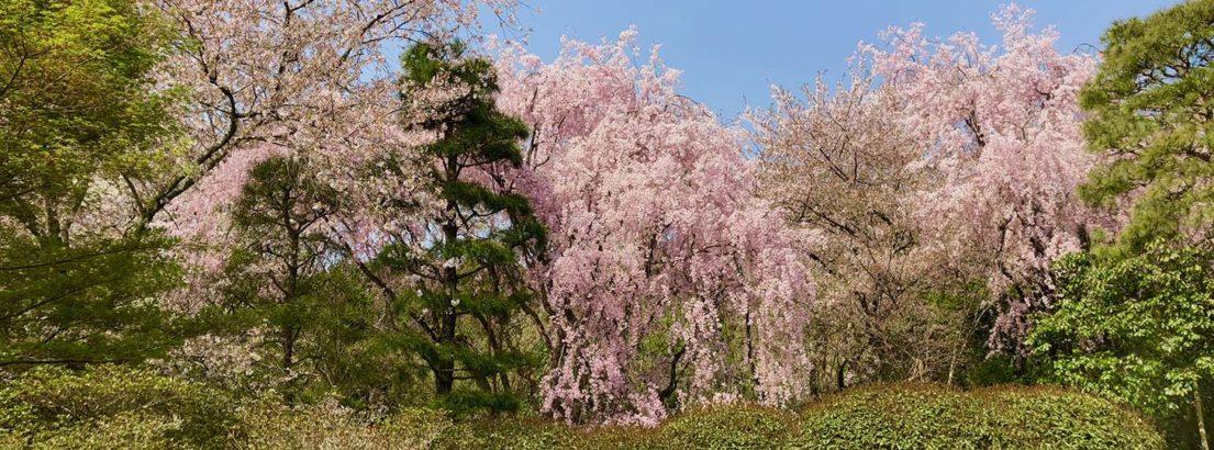stroll garden ryoan-ji kyoto